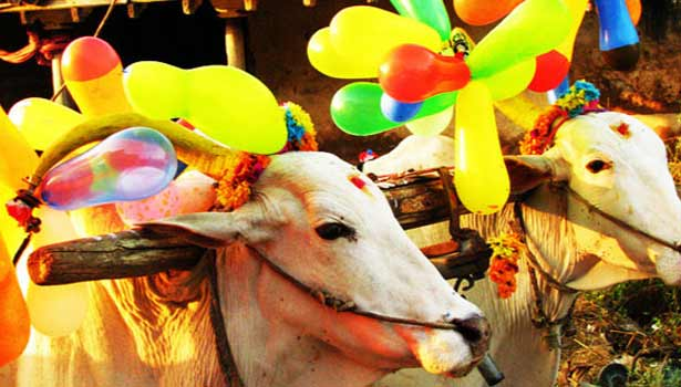 an introduction to the history of the festival of pongal Introduction: pongal is the biggest harvest festival for the people of tamil nadu an essay on pongal festival  festival essay information about history.