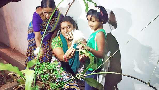 பிரம்ம கமலம் பூவை பெண்கள் ஆர்வமுடன் பார்வையிடும் காட்சி.